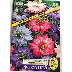 Kehribar Çiçeği Tohumu