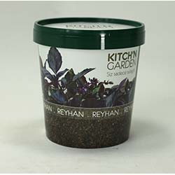 Kitch'n Garden - Reyhan