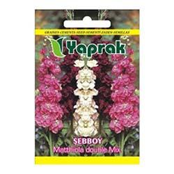 Yaprak Şebboy Çiçeği Tohumu