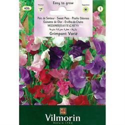 Vilmorin Nazende Çiçeği Sarmaşık Itırşahi Tohumu