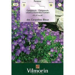 Vilmorin Çan Çiçeği Tohumu