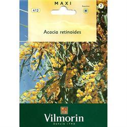 Vilmorin Dört Mevsim Mimozası Tohumu
