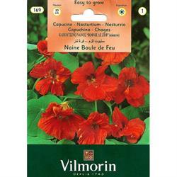 Vilmorin Kırmızı Latin Çiçeği Tohumu