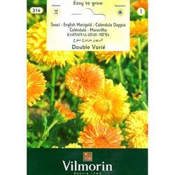 Vilmorin Portakal Nergisi Kandil Çiçeği Tohumu