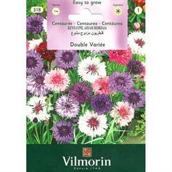 Vilmorin Kantaron Peygamber Çiçeği Tohumu