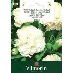 Beyaz Renkli İri Çiçekli Karanfil Tohumu
