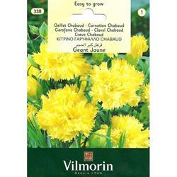 Sarı Renkli İri Çiçekli Karanfil Tohumu