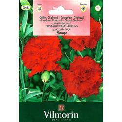 Kırmızı İri Çiçekli Karanfil Tohumu