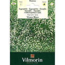 Vilmorin Beyaz Bahar Yıldızı Tohumu