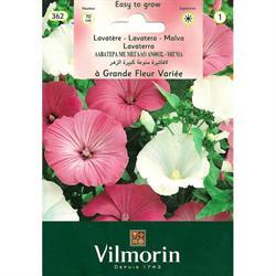 Vilmorin Pamuk Çiçeği Tohumu
