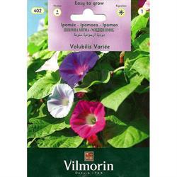 Vilmorin Karışık Kahkaha Çiçeği Tohumu