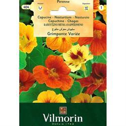 Vilmorin Kapuçin Sarmaşık Latin Çiçeği