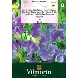 Vilmorin Eflatun Nazende Çiçeği Tohumu