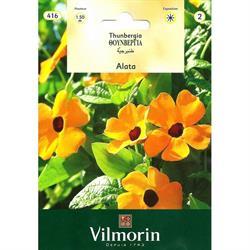 Vilmorin Tunbergiya Çiçeği Tohumu
