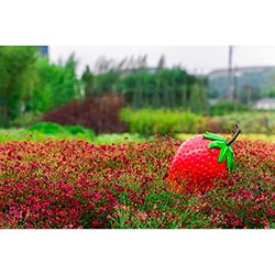 Greenmall 078-K Dekoratif Çilek Bahçe Süsü