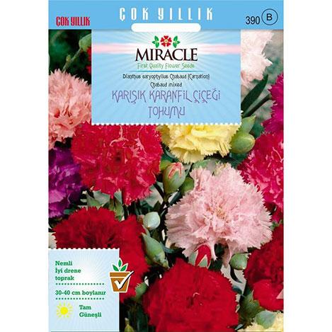 Miracle Chabaud Mixed Karışık Renkli Karanfil Çiçeği Tohumu - 240 Tohum