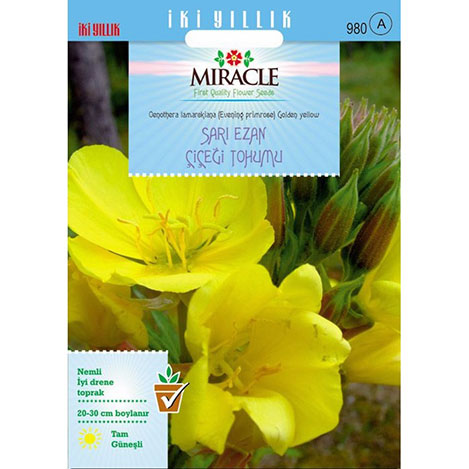 Miracle Ezan Çiçeği Tohumu- 480 Tohum