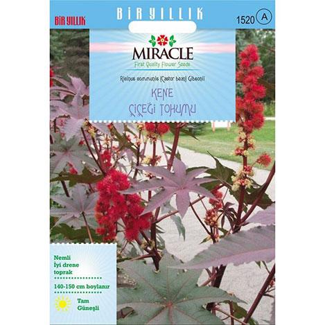 Miracle Gibsonii Kene - Castor Bean Çiçeği Tohumu - 5 Tohum