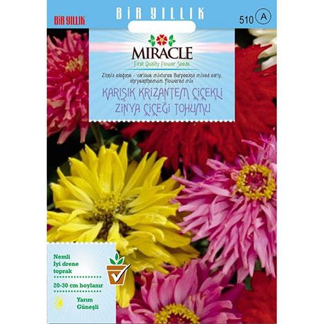 Miracle Karışık Krizantem Çiçekli Zinya Çiçeği Tohumu - 150 Tohum