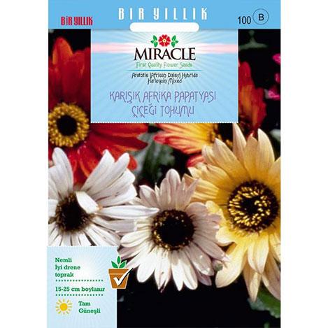 Miracle Karışık Renkli Afrika Papatyası Çiçeği Tohumu - 30 Tohum