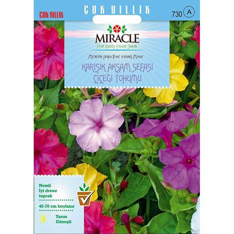 Miracle Karışık Renkli Akşam Sefası Çiçeği Tohumu - 64 Tohum
