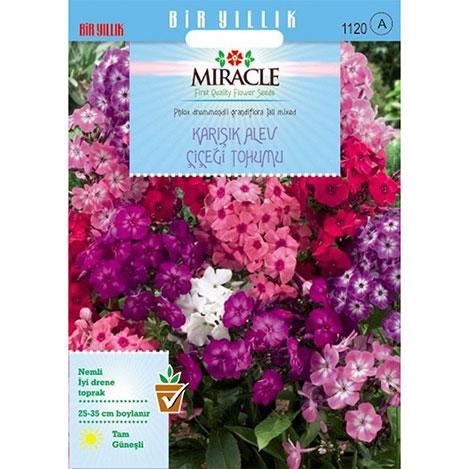 Miracle Karışık Renkli Alev Çiçeği Tohumu- 340 Tohum