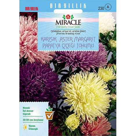 Miracle Karışık Renkli Amerikan Branching Aster Margarit Papatya Çiçeği Tohumu - 360 Tohum