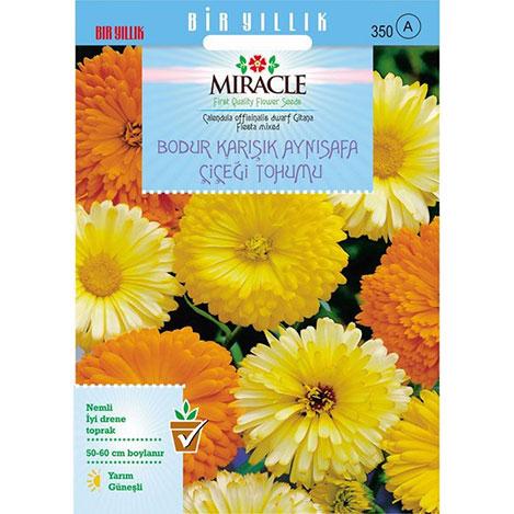 Miracle Karışık Renkli Bodur Aynısafa Çiçeği Tohumu - Gitana Mixed - 150 Tohum