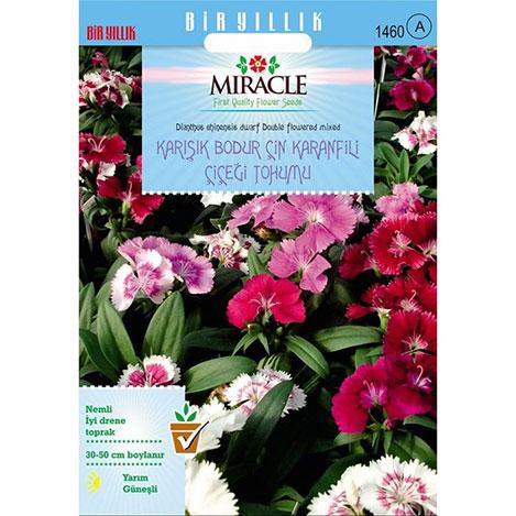 Miracle Karışık Renkli Bodur Çin Karanfili Çiçeği Tohumu - 450 Tohum