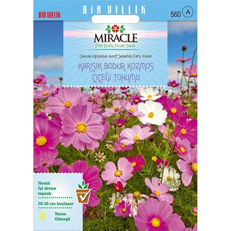 Miracle Karışık Renkli Bodur Cosmos - Kozmos Çiçeği Tohumu- 50 Tohum