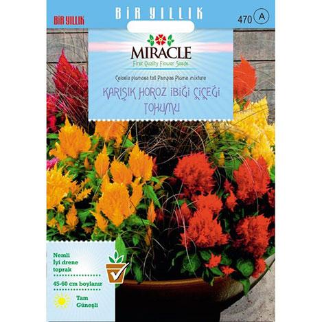 Miracle Karışık Renkli Horoz İbiği Çiçeği Tohumu - 800 Tohum