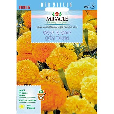 Miracle Karışık Renkli İri Kadife Çiçeği Tohumu - 290 Tohum
