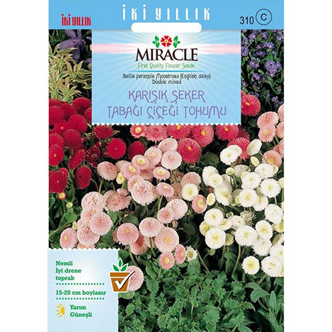 Miracle Karışık Şeker Tabağı- Çayır Papatyası Çiçeği Tohumu- 600 Tohum