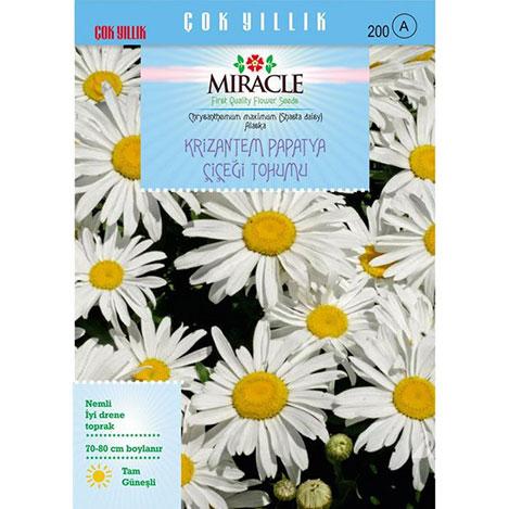 Miracle Maximum Alaska Krizantem Papatya Çiçeği Tohumu - 300 Tohum