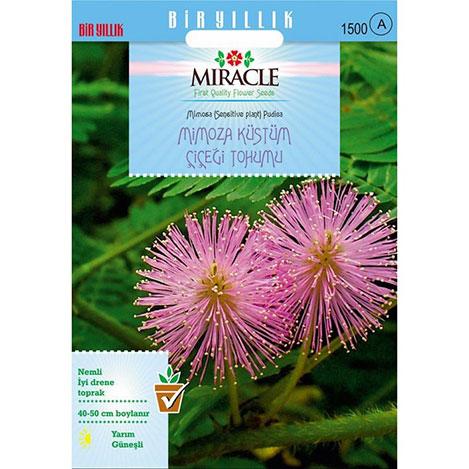 Miracle Mimoza Küstüm Çiçeği Tohumu- 140 Tohum