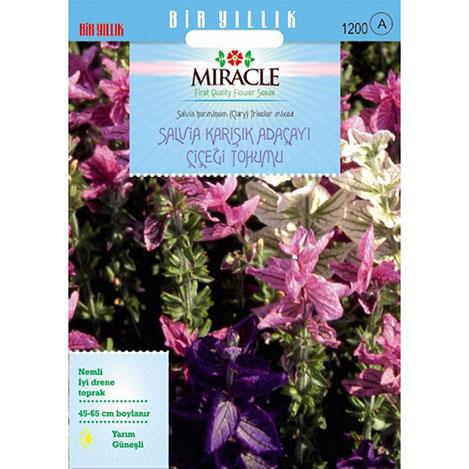 Miracle Salvia Horminum Karışık Renkli Adaçayı Çiçeği Tohumu - 350 Tohum
