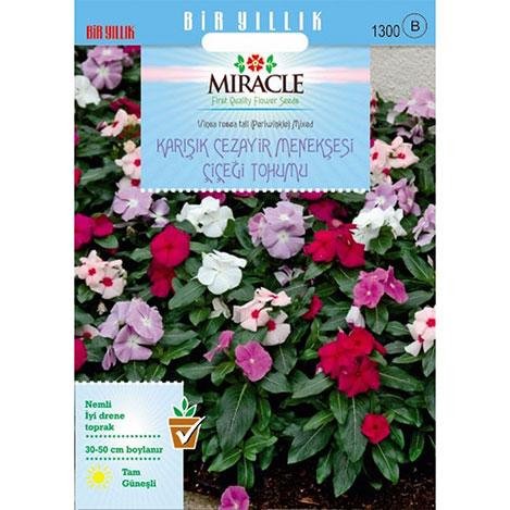 Miracle Karışık Renkli Cezayir Menekşesi Tohumu - 140 Tohum