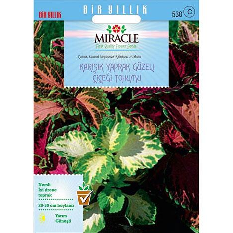 Miracle Karışık Renkli Kolyos - Coleus Yaprak Güzeli Çiçeği Tohumu- 700 Tohum