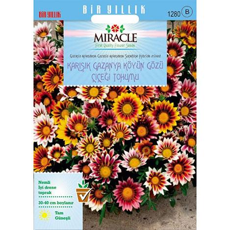 Miracle Karışık Renkli Koyun Gözü Gazanya Çiçeği Tohumu- 70 Tohum