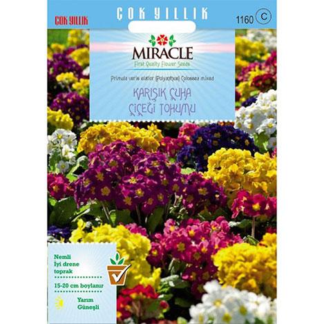 Miracle Karışık Renkli Onbir Ay Çuha Çiçeği Tohumu - 50 Tohum