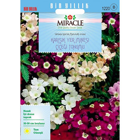 Miracle Karışık Renkli Yer Minesi - Verbena Çiçeği Tohumu - 100 Tohum