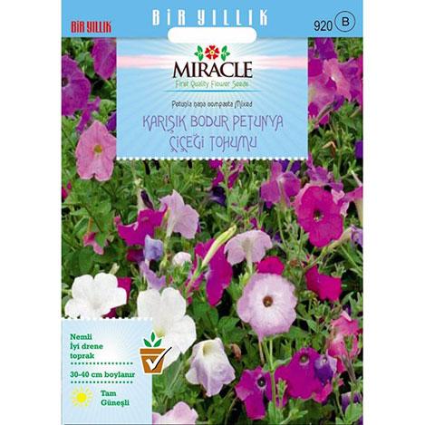 Miracle Nana Compacto Karışık Renkli Bodur Petunya Çiçeği - 800 Tohum