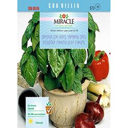 Miracle Geniş Yapraklı Tatlı Fesleğen Tohumu