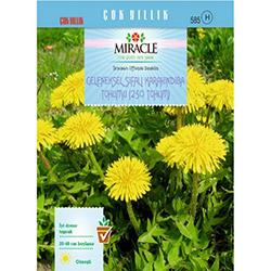 Miracle Şifalı Karahindiba Tohumu