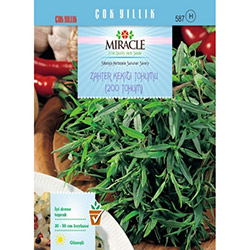 Miracle Zahter Kekiği Tohumu