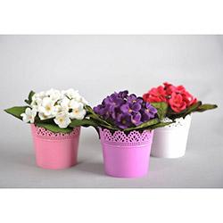 Floral B6 Dantel Saksılı 3'lü Menekşe Seti