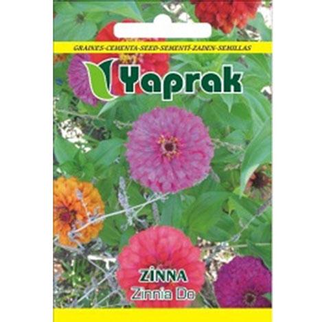 Resim  Yaprak Zinna Çiçeği Tohumu