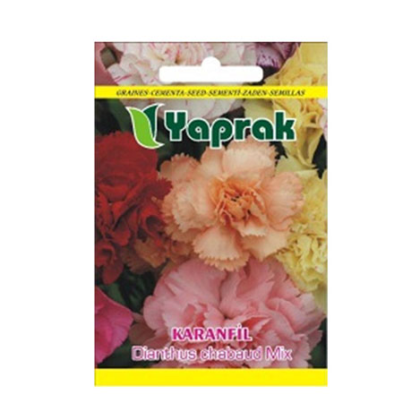 Resim  Yaprak Karanfil Çiçeği Tohumu
