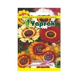 Yaprak Kasımpatı Çiçeği Tohumu
