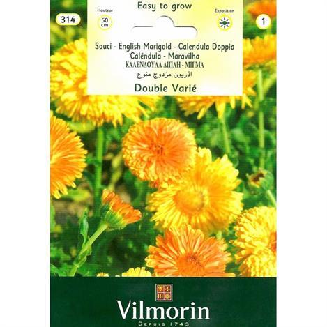 Resim  Vilmorin Portakal Nergisi Kandil Çiçeği Tohumu